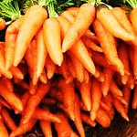 buy carrot seed essential oil
