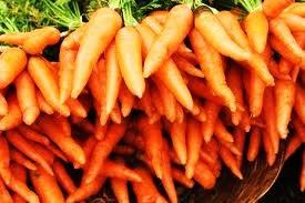 buy carrot seed essential oil
