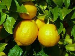 buy lemon oil